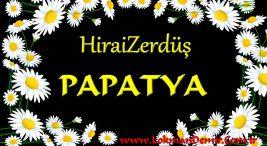 HiraiZerdüş Papatya ŞArkı Sözleri